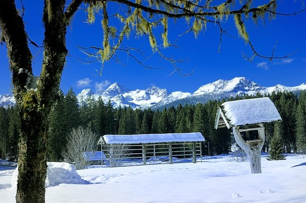 Winter wedding in Slovenia